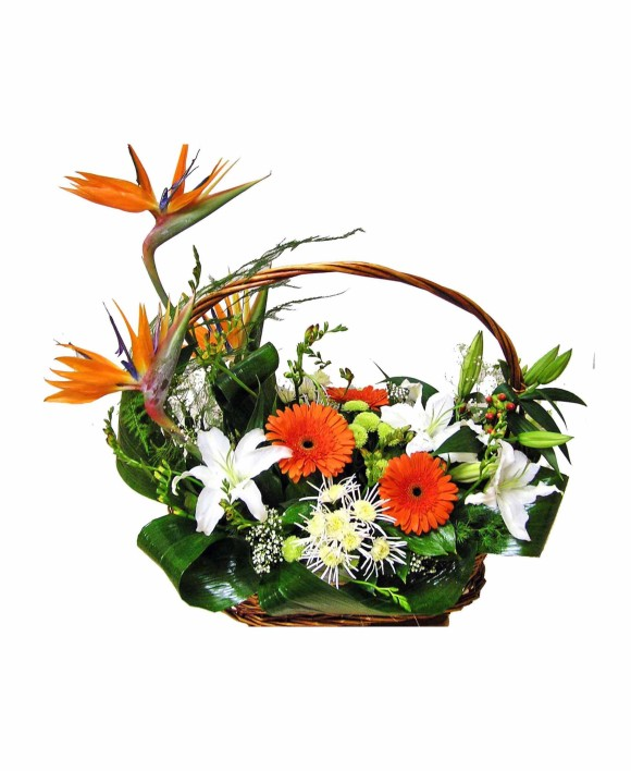 flowers basket of strelizia, gerberas and lillies