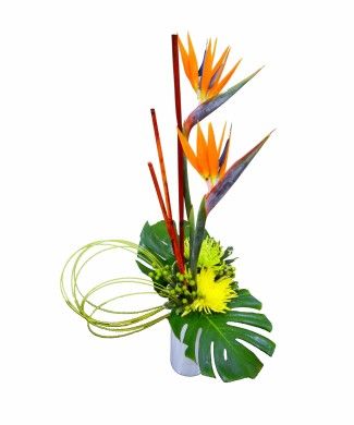 corporate flowers strelitzia