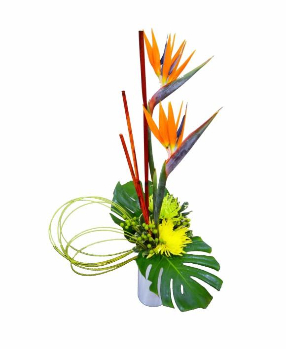 corporate flowers strelitzia