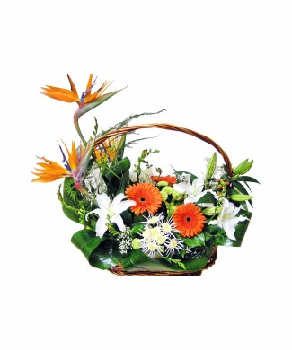 bouquet of strelitzia, gerbera and lilies