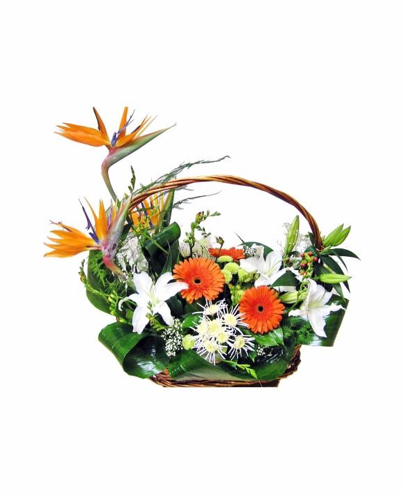 bouquet of strelitzia, gerbera and lilies