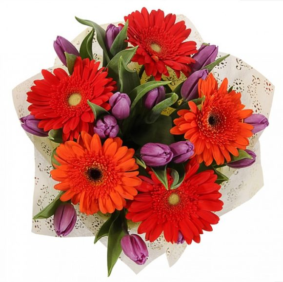 bouquet of red gerberas and purple tulips