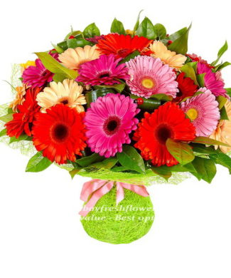 Bouquet of cream, red and pink gerbers