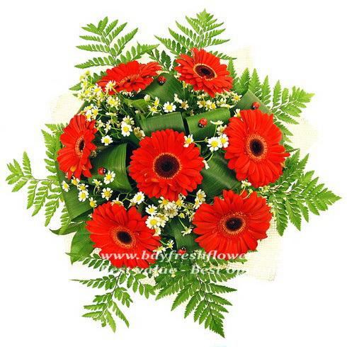 bouquet of red gerbers