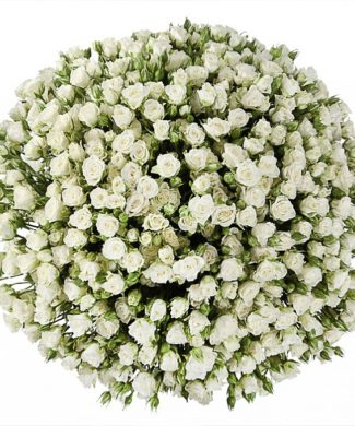 2008 Huge bouquet of roses - white