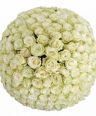 2001 White roses 50 -100 long stems