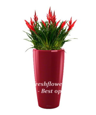potted plants and flowers (Vriesea)