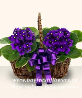 bouquet of fresh flowers with violets