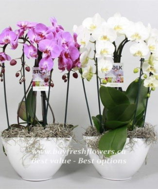planted plants and flowers (orchid)