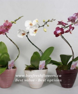 potted plants and flowers (orchid)