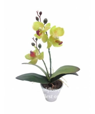 potted plants and flowers (yellow orchid)