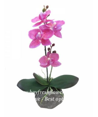 potted plants and flowers (pink orchids)