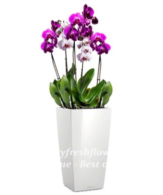 potted plants and flowers (purple and white orchids)