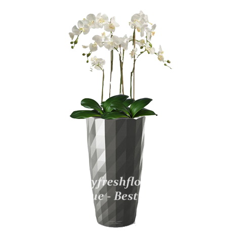 potted plants and flowers (white orchids)