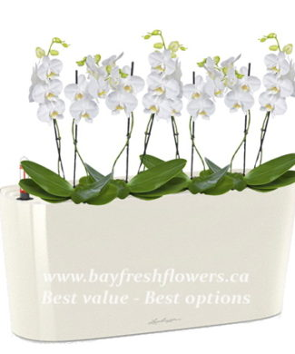 potted plants and flowers (white orchid)