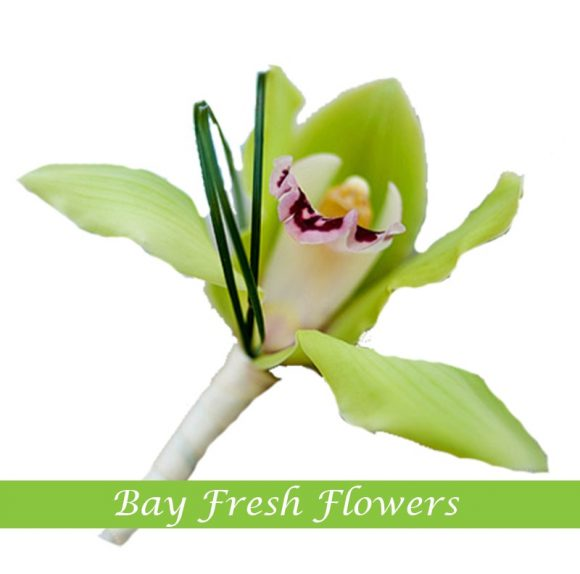 groom boutonniere of green orchid