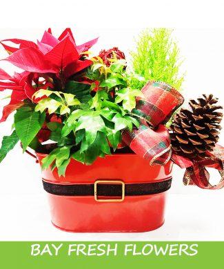 Christmas garden in a box
