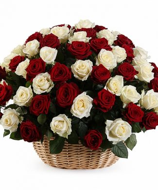 2012 Large arrangement with 50,100,200 red and white roses in a basket