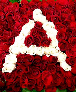 207708 - IN HONOR OF HER NAME- 50, 100, 200 stems of premium red and white roses